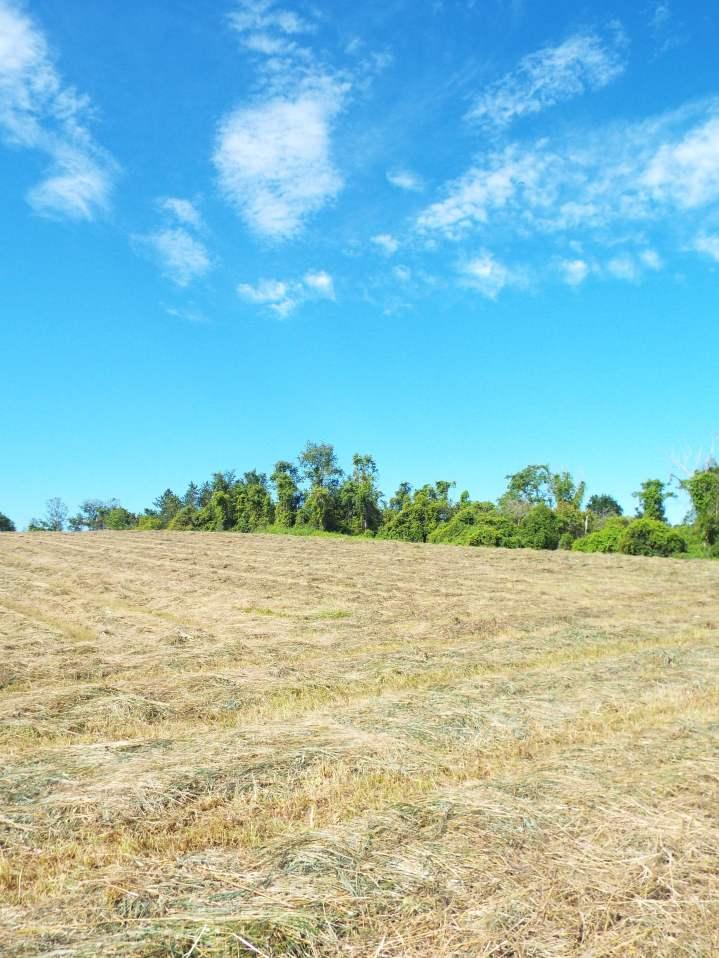 hayed field under gorgeous sky