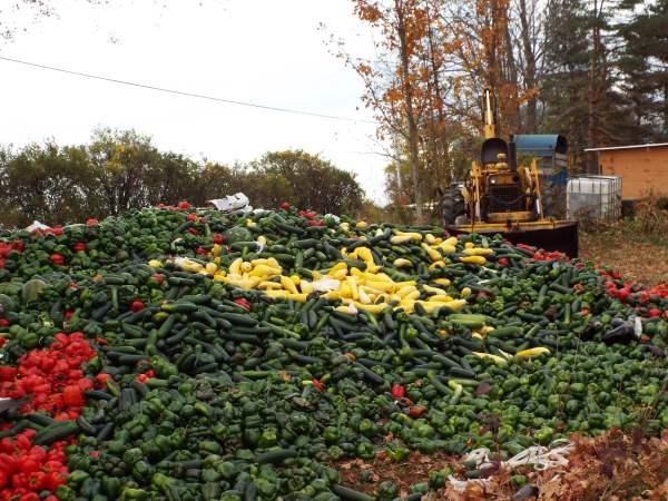 big pile o veggies