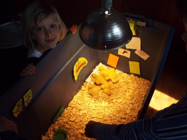 Allie decorated the duckling nursery.