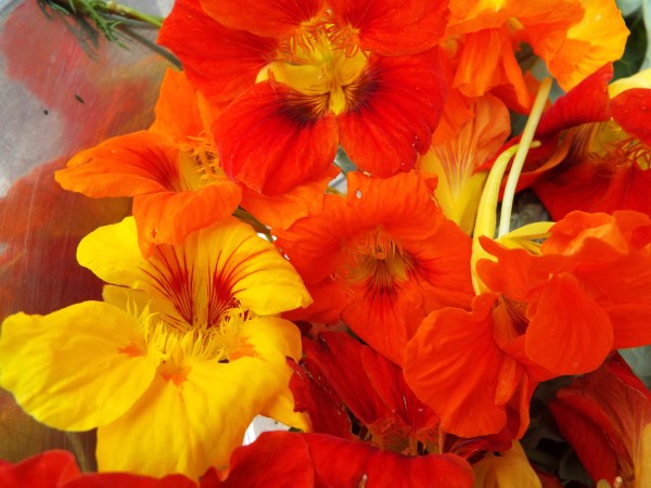 Nasturtium flowers add beauty to salads.