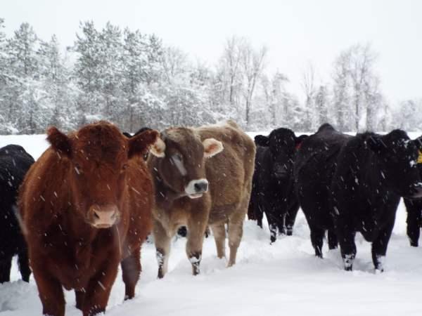 DSCF9586animals in snow