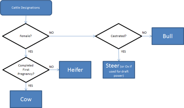 This flowchart represents the main descriptions of cattle. Many other secondary descriptions are also used.
