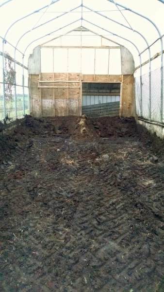 Scraping out the partially composted bedding from last winter's pigs.