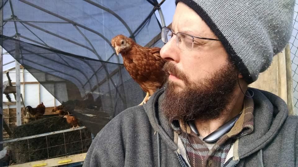 Chicks - Shoulder