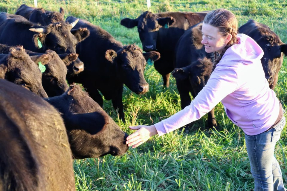 Farmer Rachel with her herd of grass fed beef cattle at Wrong Direction Farm