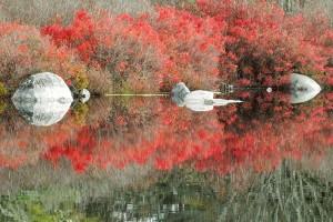 Rhodora and Granite, by Mimmi Henriksen (at Cranberry Lake)