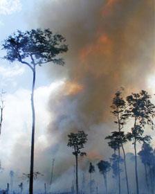Incendios en la selva amazónica en el estado de Pará, Brasil en 2003