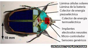 Gráfico del escarabajo