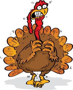 scared_turkey_2