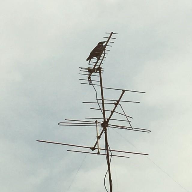 くもりがらす。#イマソラ #mysky #sky #cloud #bird #crow #electric #line