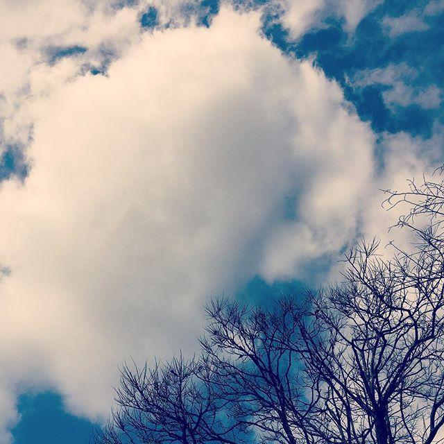 お昼は寒かったけど、天気もよくなったので、気持ちよくなって散歩。おっきなわたあめのような雲!#イマソラ #mysky #sky #cloud #tree #winter