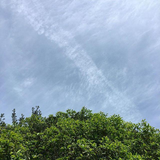 おはようございます。今日は既に少し暑い熊本です。余震も少なくなり、被害の少ない我が地域にも疲れが出てきています。街は閑散としてます。今日も緑がきれいですね。良い1日をお過ごしください。#イマソラ #mysky #sky #fine #blue #clouds #tree #green #spring #kumamoto #japan #2016