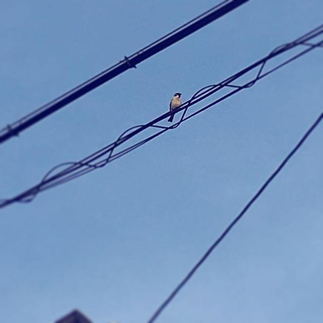 おっと、そんなところにお客さま。#イマソラ #mysky #sky #fine #blue #lines #bird #sparrow