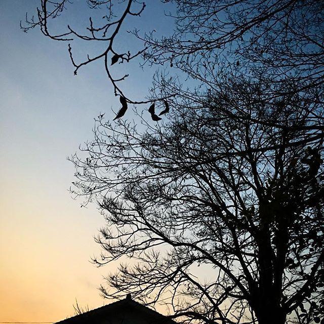 曇っていたようだけど、きれいに焼けていました。灯りの恋しい季節です。今日も無事終わりました。お疲れ様です。また明日。#イマソラ #mysky #sky #fine #sunset #tree #shadow #house #window #light #winter #january #2017