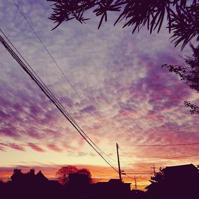だんだんお正月らしさがなくなって行く気がします。今日も暖かなよい夕焼けでした#mysky #sky #sunset #fine #clouds #line #town #shadow #sihouette #warm #winter #january #2017 #イマソラじゃないけど #gn