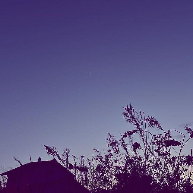 どうしても入りたいというカーブミラーのわがままを聞いて映画のような夕暮れ。今日の散歩は風が冷たくて寒かったよ。春の香りはしたけれど。#イマソラ #mysky #sky #sunset #fine #coldday #shadow #mirror #grass #neighborhood #winter → #spring #march #2017 #夕暮散歩