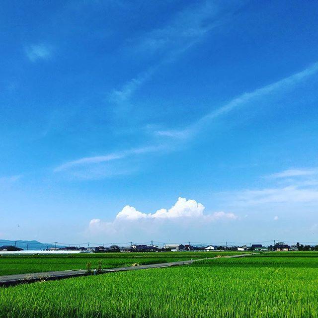 秋の気配もし始めていますが、夏らしいいい天気です。行ってらっしゃい。#イマソラ #mysky #sky #blue #green #cloud #fine