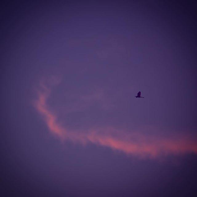 夕日にはなかなか間に合わないのです。信号で停まっているうちにどんどん沈んで。大きな太陽、つかまえ損ねました。ま、鳥でもつかまえて。今日はがっかりさようなら。#イマソラ #mysky #sky #sunset #evening #bird #hotday #summer