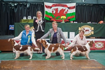 Welsh Springer Spaniel Club of South Wales Open Show 12-02-2017, held at Chepstow, Wales.