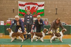 Best Bitch - TAIMERE'S TWO STEP; Reserve Best Bitch - LYNDFIL ZAZU JW; Best Puppy Bitch - PAMICKS FIELD OF DREAMS. Welsh Springer Spaniel Club of South Wales Championship Show 26-03-2016, held at Chepstow, Wales.