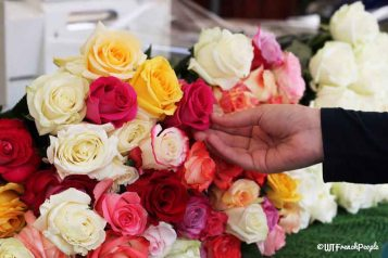 ROses_WTFrenchPeople