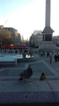 Trafalgar Square's best friend