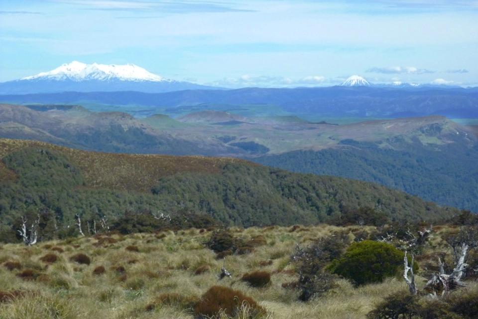 View from the ridge to Piopio