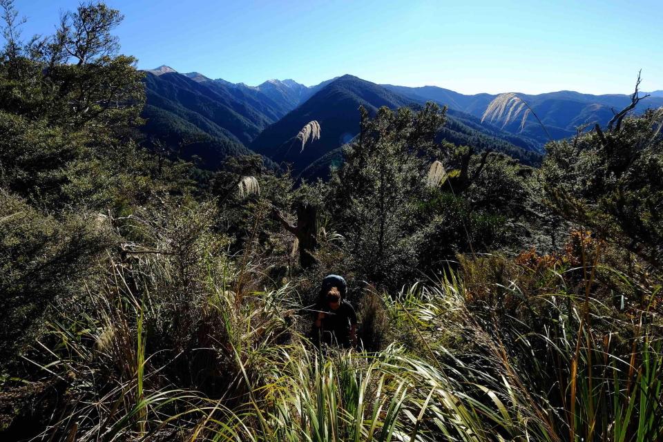Tramper in Ruahine Ranges