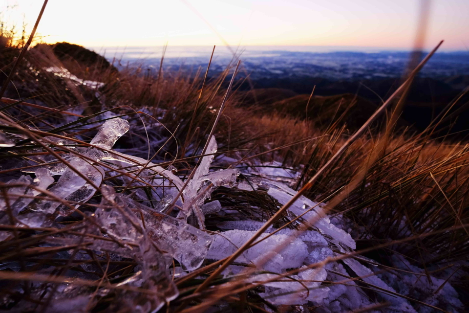 Morning ice amongst the tussock