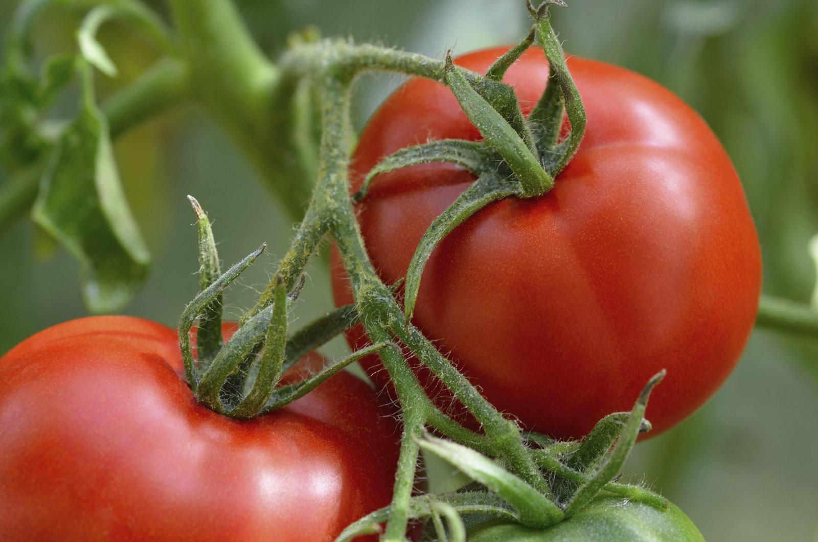 What Vegetables Plant Now Sydney