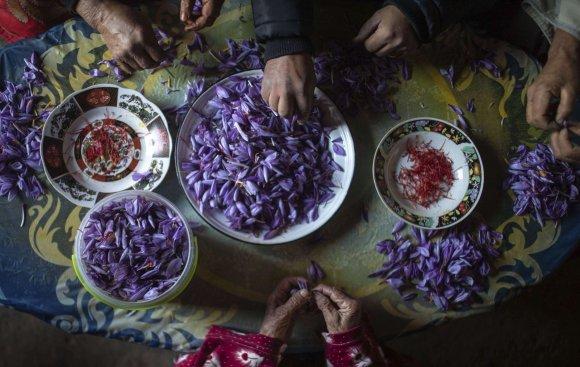 AP PHOTOS: Laborious saffron harvest unites Moroccan village | WTOP