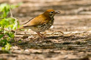 Study: A DC rescue group documents a crystal clear problem for migratory birds