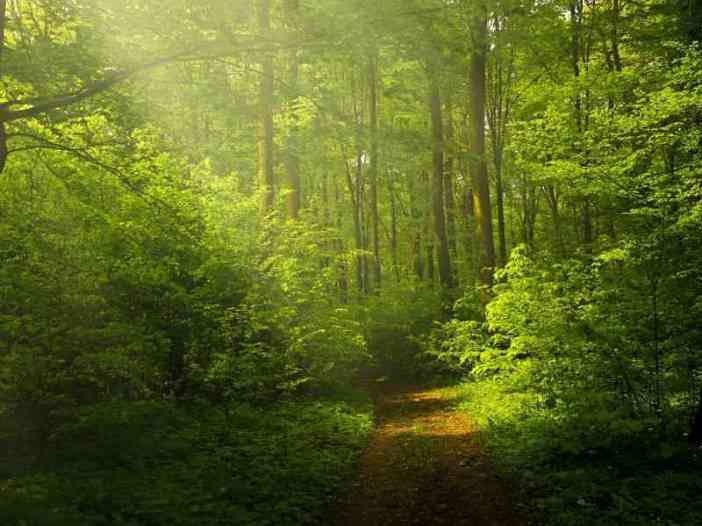 Forest nature image for wtsp dp pic