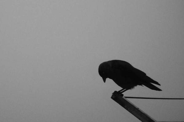 Lonely crow image for whatsapp dp