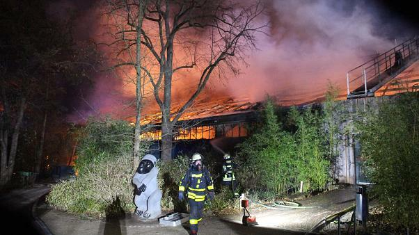Woman and 2 daughters arrested for German Zoo fire