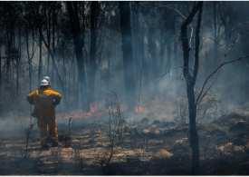 What happened to the Australian bushfires?
