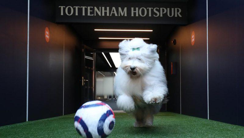 Dulux apologises for mocking Tottenham Hotspurs
