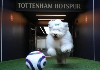Dulux apologises for mocking Tottenham Hotspurs lack of silverware