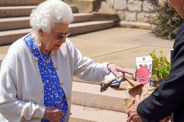Queen marks Philip's 100th birthday by planting Duke of Edinburgh rose