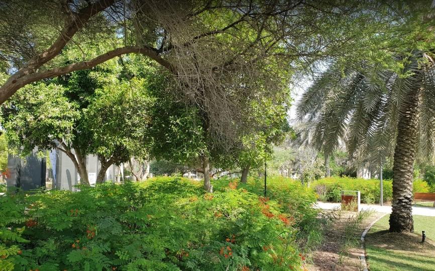 حديقة ام الامارات ابوظبي