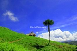 Media Visit Gorontalo 937 copy