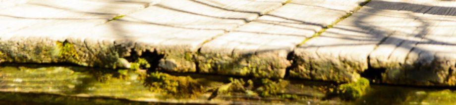 cropped-vin_87872036-2.jpg