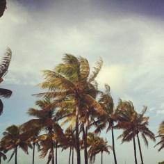 Lummus Park Miami - Wundertute