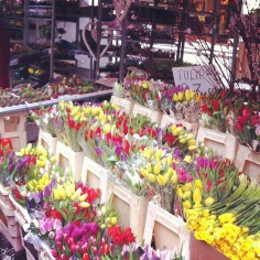 Columbia Road Flower market Londres - Wundertute