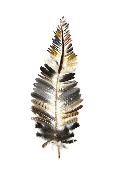 8 - feuille de plumes - feather-of-feathers (mary jo hoffman)