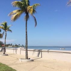 palmier cuba - wundertute
