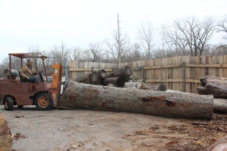 Big white oak veneer log WunderWoods