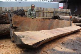 Scott Wunder WunderWoods chainsaw white oak log