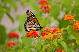 Wealth creation is like a butterfly garden