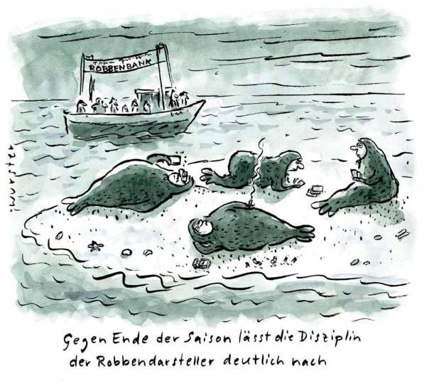 Robbenbank Kutterfahrt Seehunde Robben Nordsee Ostsee Küste Insel